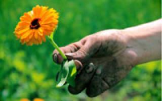 Как убрать грязь из-под ногтей на руках: что делать если попала и как очистить после огорода, как избавиться содой, отмыть перекисью и удалить иными способами?
